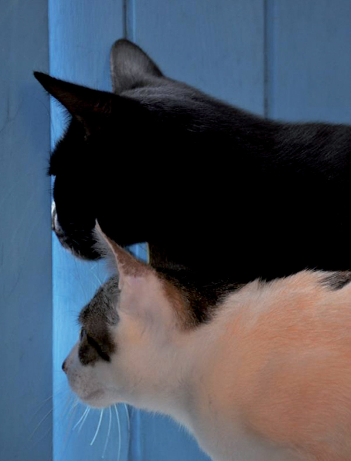 2 chats à travers une porte