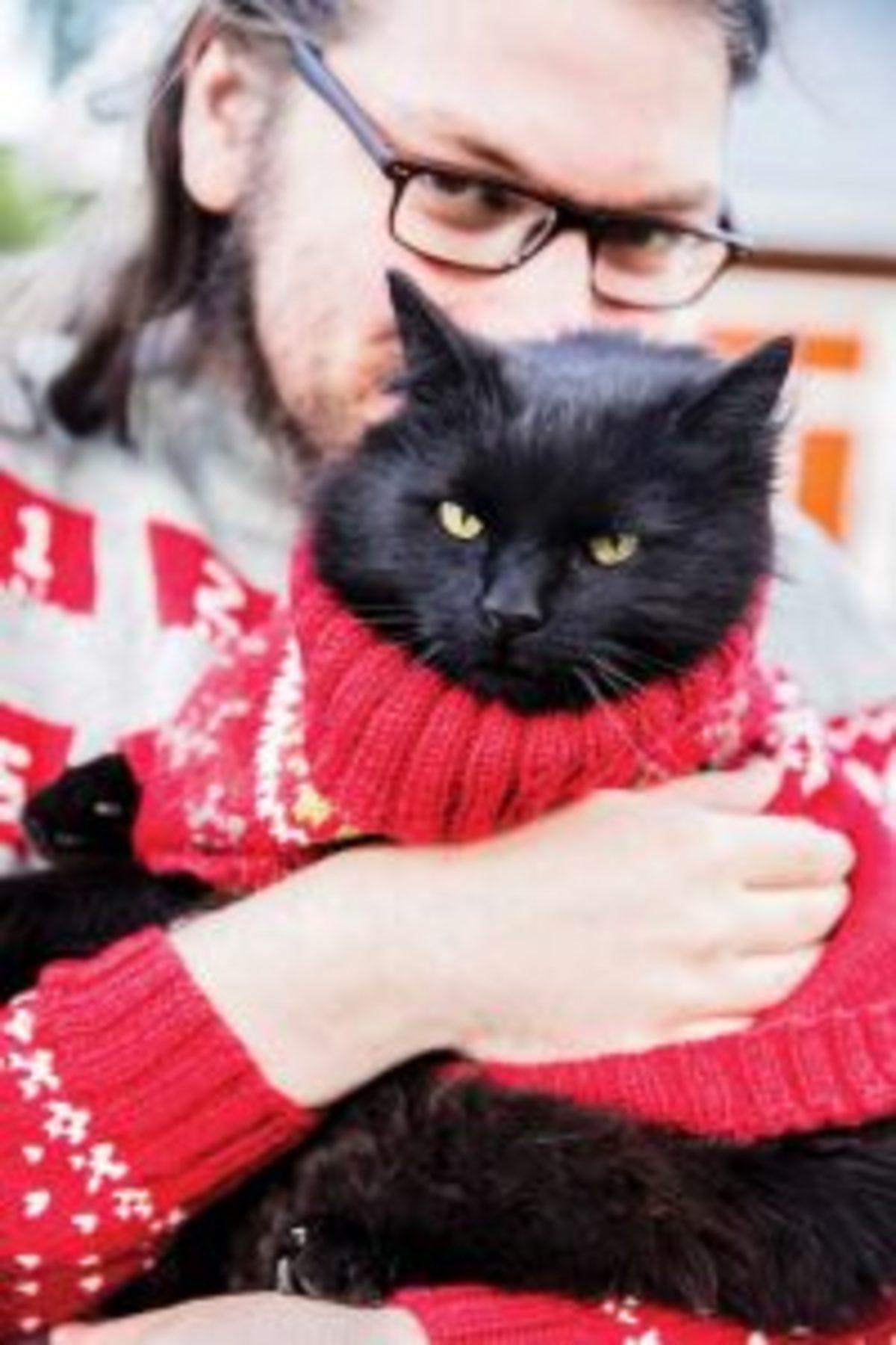 Pull de Noel au tricot pour chat