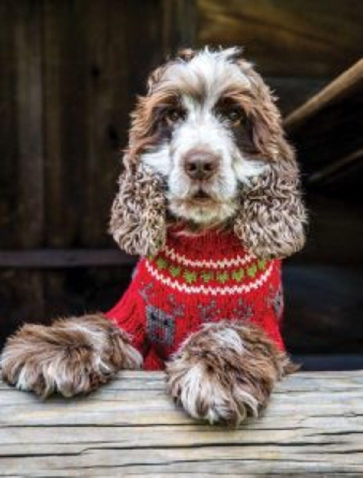 Pulls de Noel au tricot pour chien